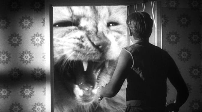 L'homme qui rétrécit : le chat prédateur