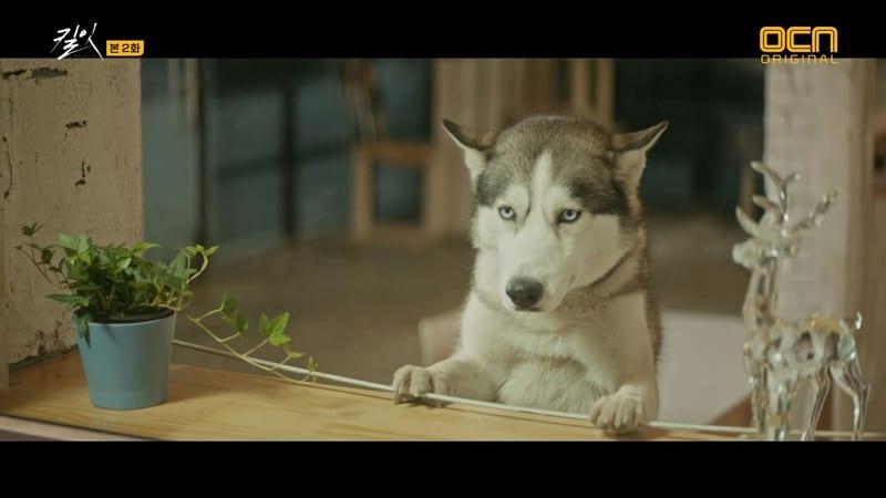 Kim Soo Hyun's dog in Kill It
